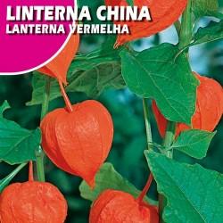 Semillas linterna china