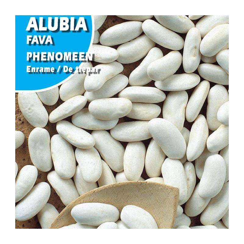 ALUBIA PHENOMEN