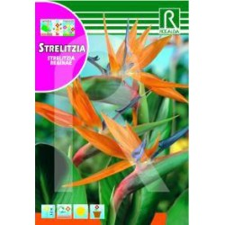 Semillas strelitzia reginae