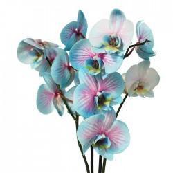 Orquídea phalaenopsis wond of nature