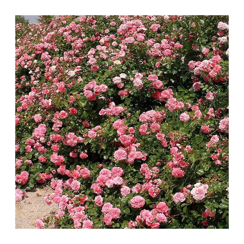 Rosal Les Quatre Saisons