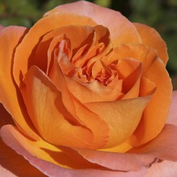 Rosal Rene Goscinny meirouve