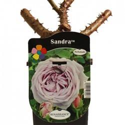 Rosal Sandra