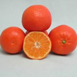 Mandarino orogrande
