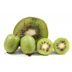 Kiwi kolomikta