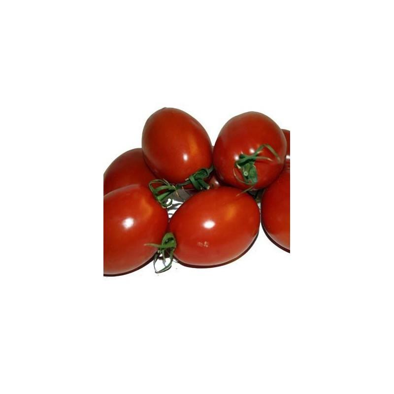 Tomate Pruna
