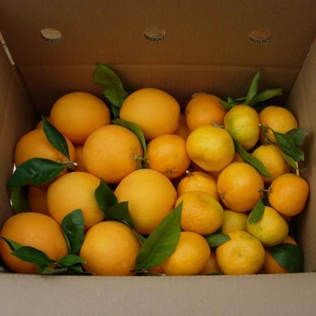 Naranja de Mesa y Mandarina