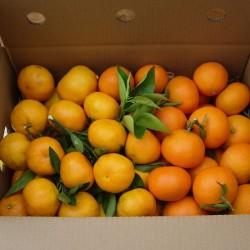 Mandarina y Clementina