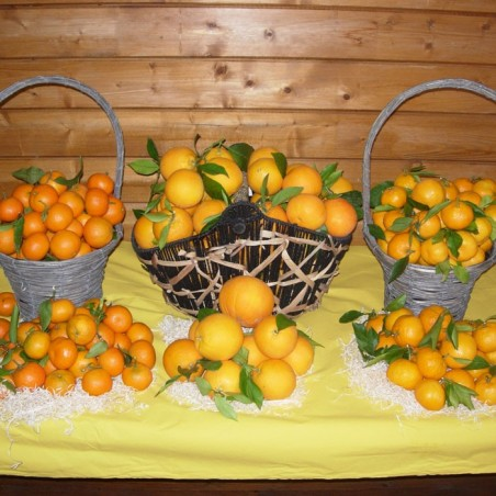 Naranja de Zumo y Clementina