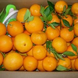 Naranja De Zumo Y Mandarina