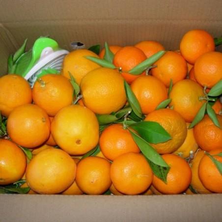 Naranja de Mesa y Zumo