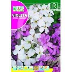 Semillas violeta de los jardines variada