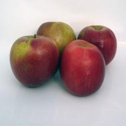 Manzano red fuji