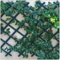 Plantas trepadoras y enredaderas
