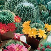 Semillas cactus y plantas grasas