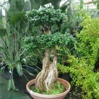 Macro-bonsai