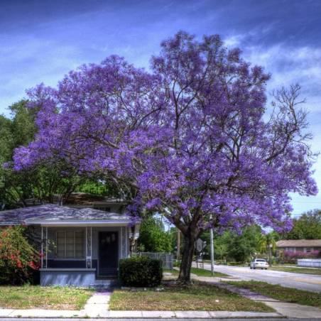 Semillas de árboles y arbustos